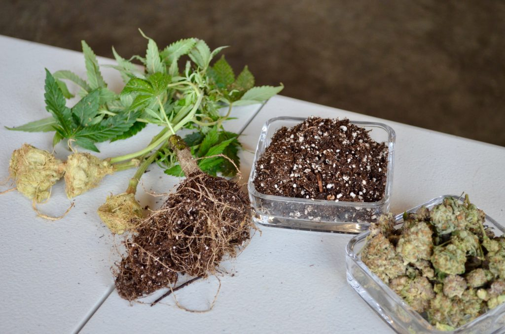 Cannabis Cultivation Waste