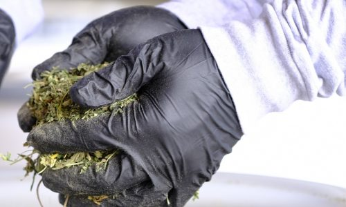 non-hazardous cannabis waste