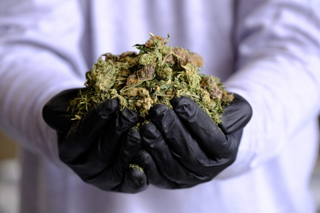 Cannabis waste solutions services