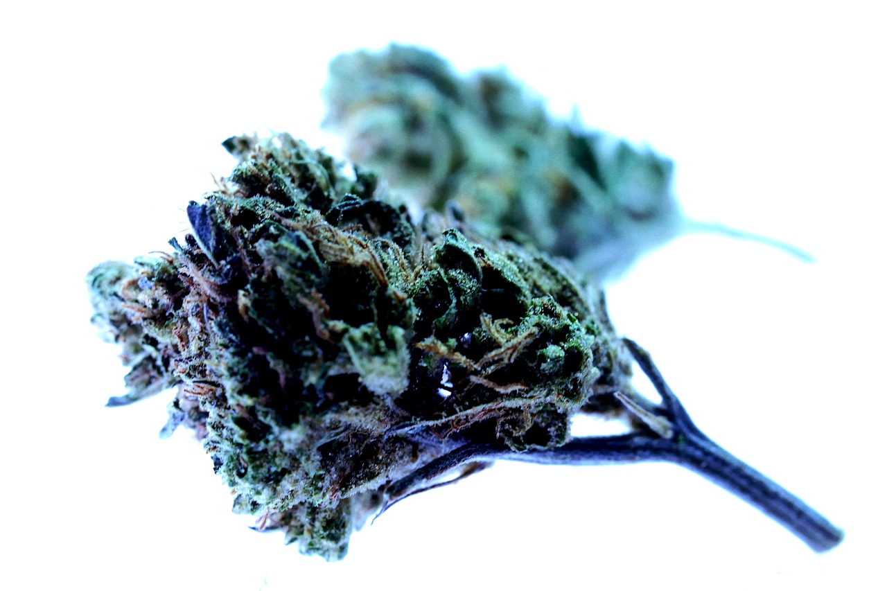 "What Does ""Unusable and Unrecognizable"" Mean When Discarding Cannabis Waste?"