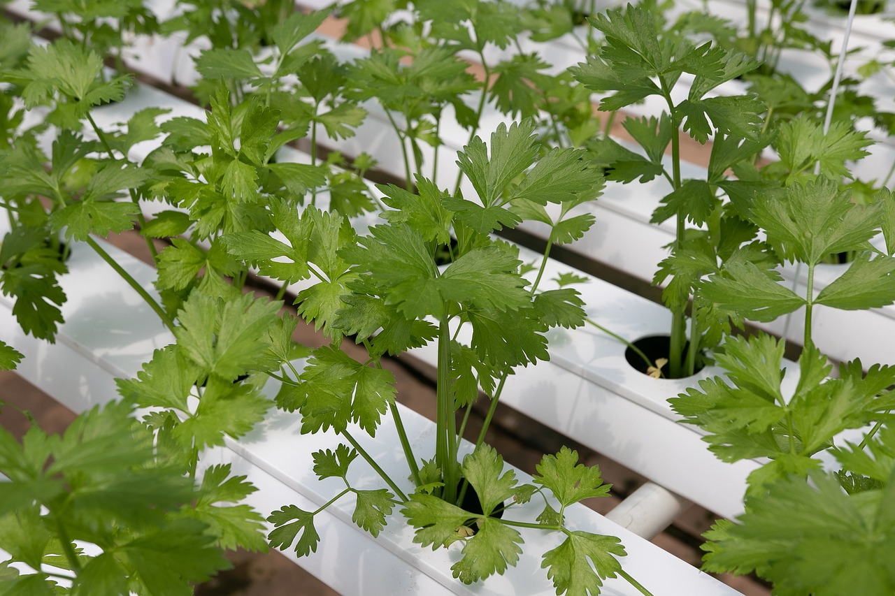 Are Hydroponic Nutrients Safe?