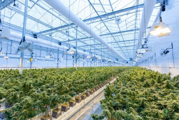 What Penalties Can Cannabis Businesses Face for Improper Waste Management in California